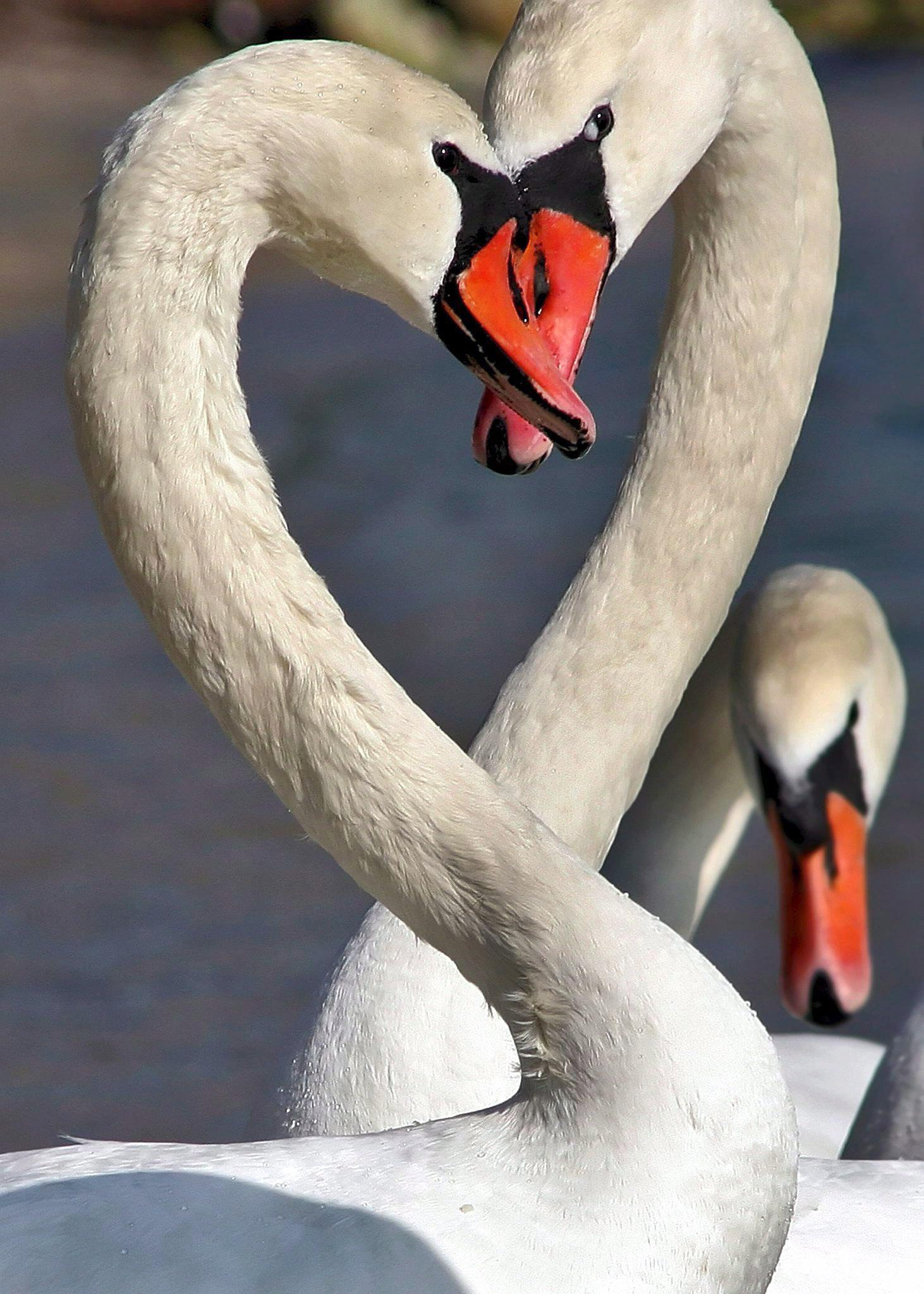 Valentinstag auf schwänisch – ganz ohne Geschenke...