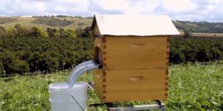 Automatischer Bienenstock für tierschonende Honigproduktion