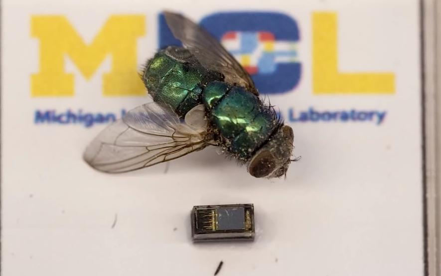 Der Vergleich mit einer Fliege zeigt, wie klein der Computer M3 ist. Für die Energieversorgung ist sogar eine Solarzelle integriert.