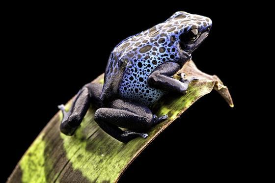Die Natur ist ein weites Feld, um neue Strukturen für Leichtbau und Oberflächenstrukturen zu finden. Forscher haben beispielsweise die Haut des Pfeilgiftfrosches als Vorbild für die Oberflächenstruktur von Tragflächen genutzt, um deren Vereisung zu verhindern.
