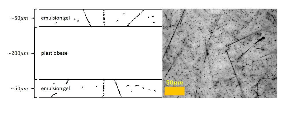 Schematischer Schnitt durch eine Lage eines Emulsionsfilmes (li.) und Ansicht eines Filmausschnitts unter dem Mikroskop (re.).
