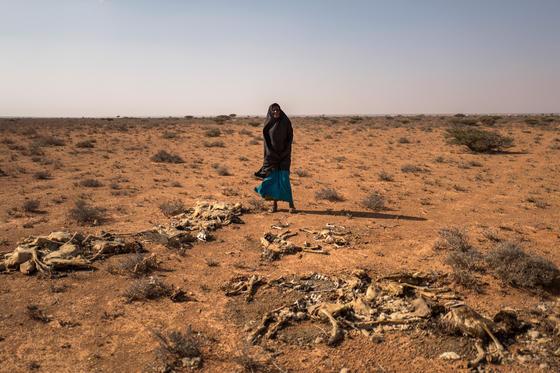 Heute wird die Sahelzone regelmäßig von Dürren heimgesucht.