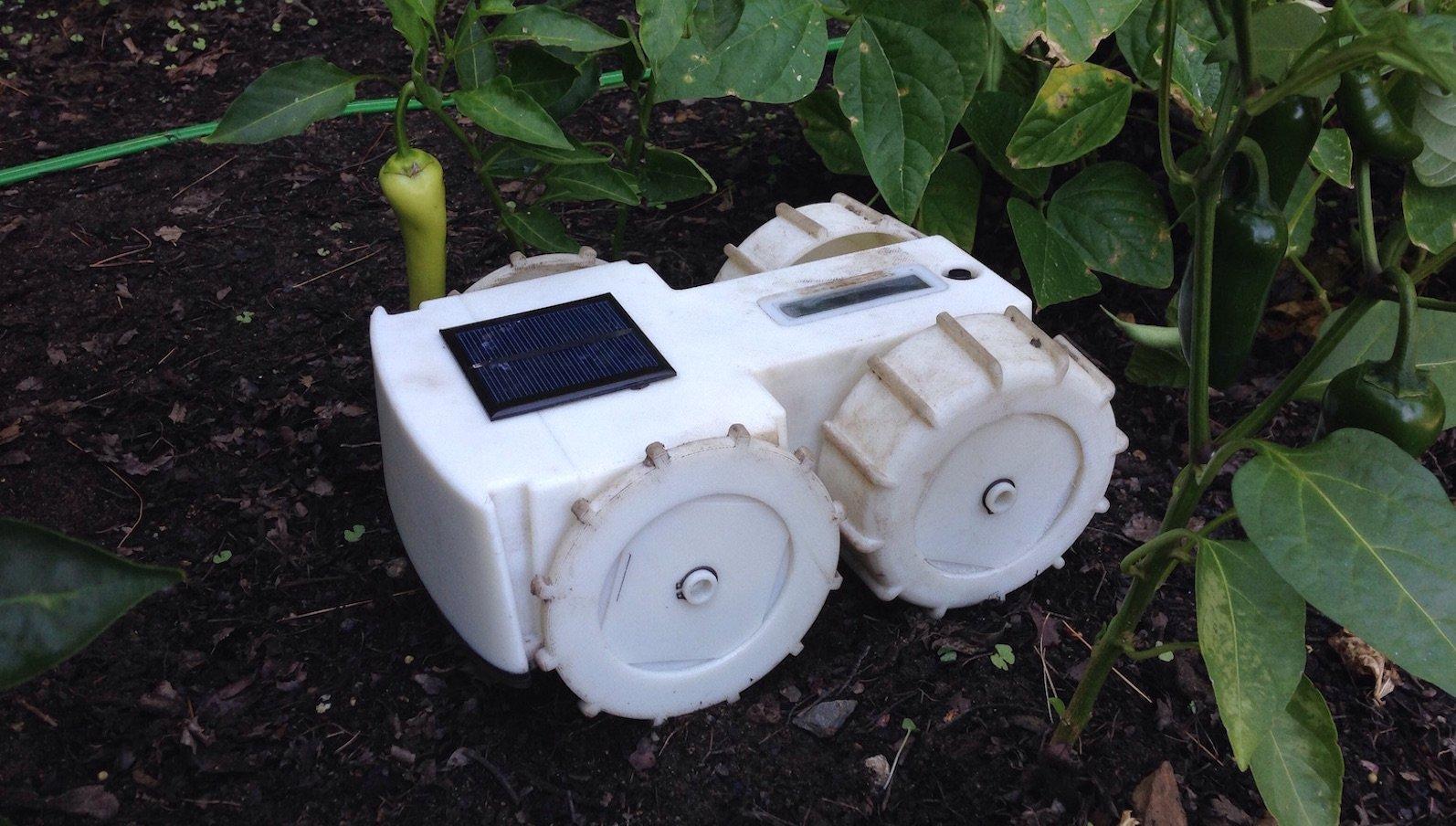 Unkrautroboter Tertill fährt mit Solarstrom und trimmt ungebetene Pflanzen weg.