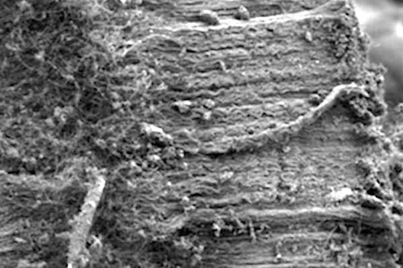 Die Nahaufnahme zeigt Kohlenstoff-Nanoröhrchen, die auf Quarzfasern wachsen.