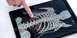 Röntgenbilder, die selbst Laien verstehen