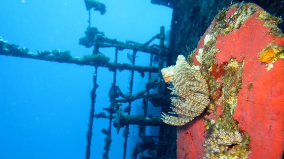 Stichwort Biofouling: Was auf diesem Bild eines Wracks ganz hübsch aussieht, kostet Reedereien ein kleines Vermögen.