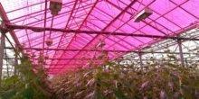 Dieses rote Gewächshaus produziert Solarstrom – und lässt Gemüse wachsen