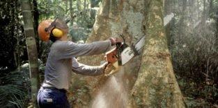 Abholzung im Regenwald