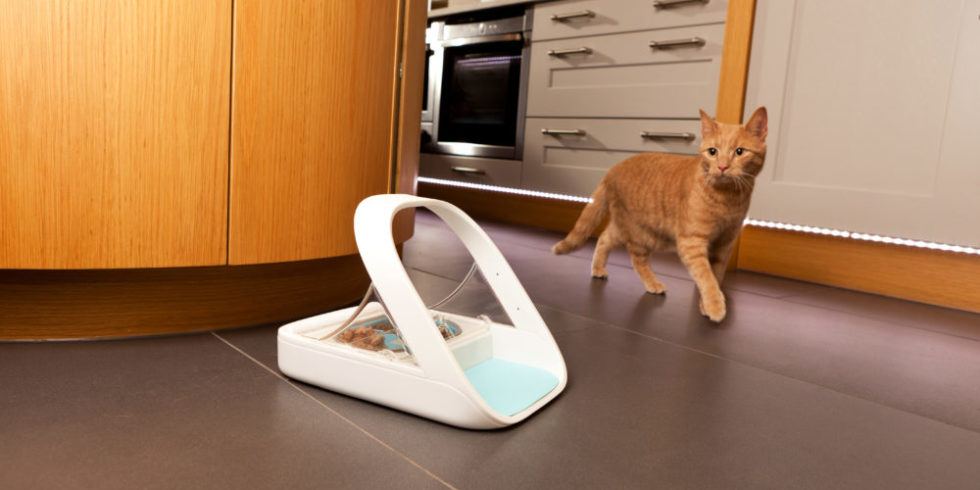The cat runs towards the feeder standing on the floor