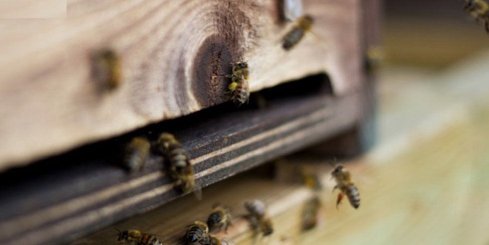 In Hamburg sollen eine Million Bienen in einem umgebauten Schiffscontainer eine neue Heimat finden.