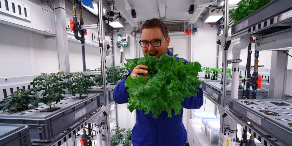 Mitten im ewigen Schnee Salat, 18 Gurken und 70 Radieschen geerntet