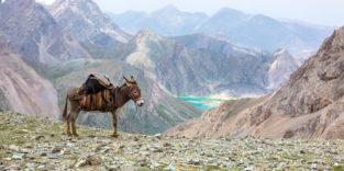 Esel vor dem kargen Hochland von Tibet