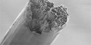 Neue Superfaser ist achtmal stärker als Spinnenseide