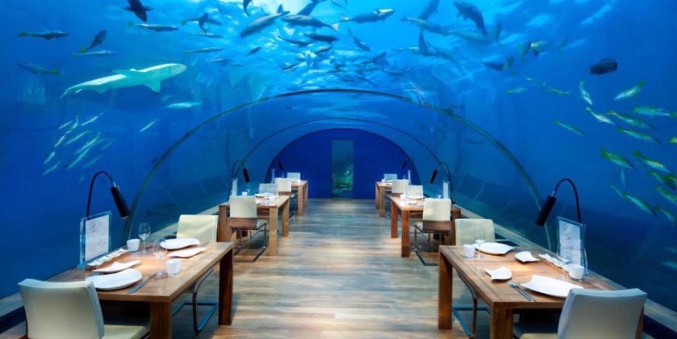"""Der Hai schaut zu, wenn die Gäste kommen: Das """"Conrad Maldives Rangali Island"""" mit seinem Restaurant """"Ithaa"""", was in der maledivischen Amtssprache Dhivehi """"Perlmutter"""" bedeutet, war Vorreiter in Sachen Unterwasser-Restaurant. Das ganz besondere Restaurant feierte am 15. April 2005 die Eröffnung."""