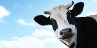 Astronautennahrung für die Kuh