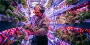 Wissenschaftler in der Vertical-Farming-Anlage