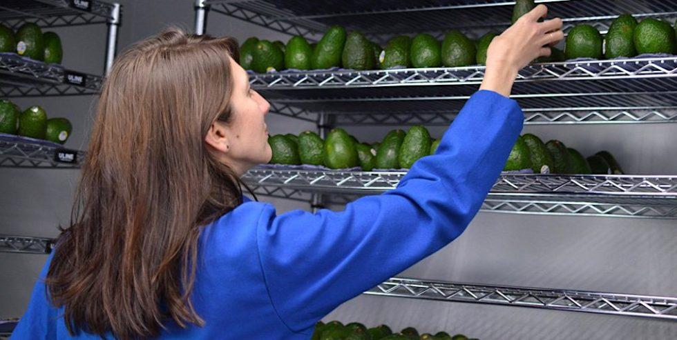 Mit dem pflanzlichen Überzug Apeel können Avocados zwei bis dreimal länger gelagert werden.