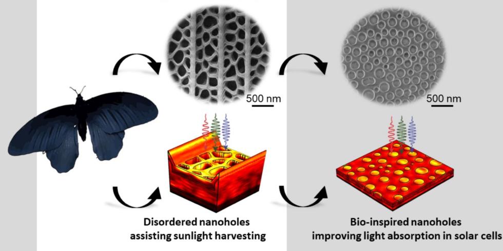 Modell der Übertragung von der Natur auf eine photovoltaische Anwendung