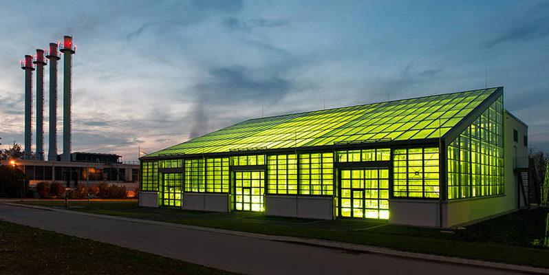 Es ist ein beleuchtetes Gewächshaus des Algentechnikums der TU München zu sehen.