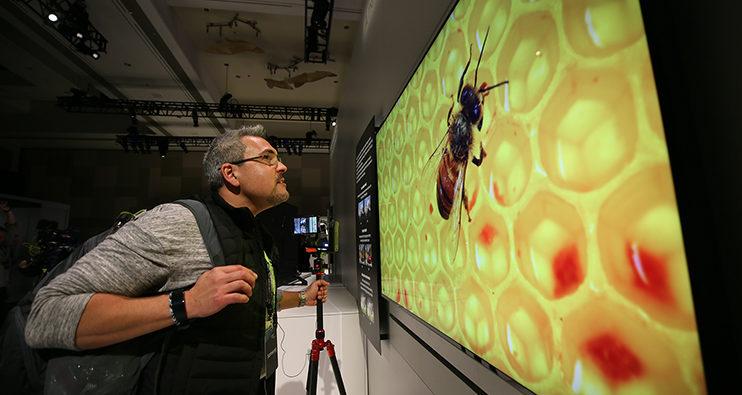 8k-Leinwand zeigt gestochen scharfes Bild einer Biene, die auf einer Wabe sitzt.