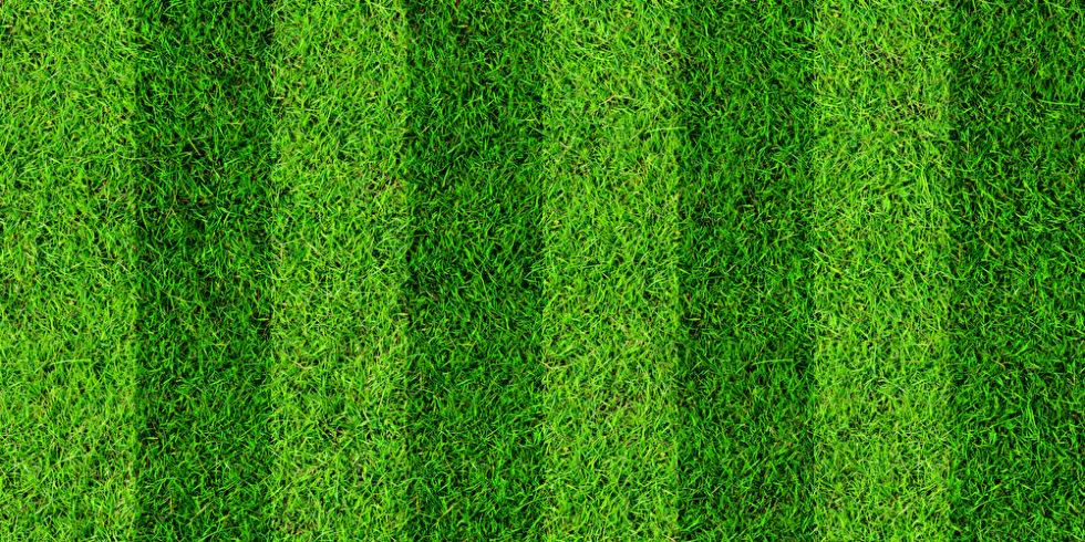 Rasenplatz Fußball stat und grün