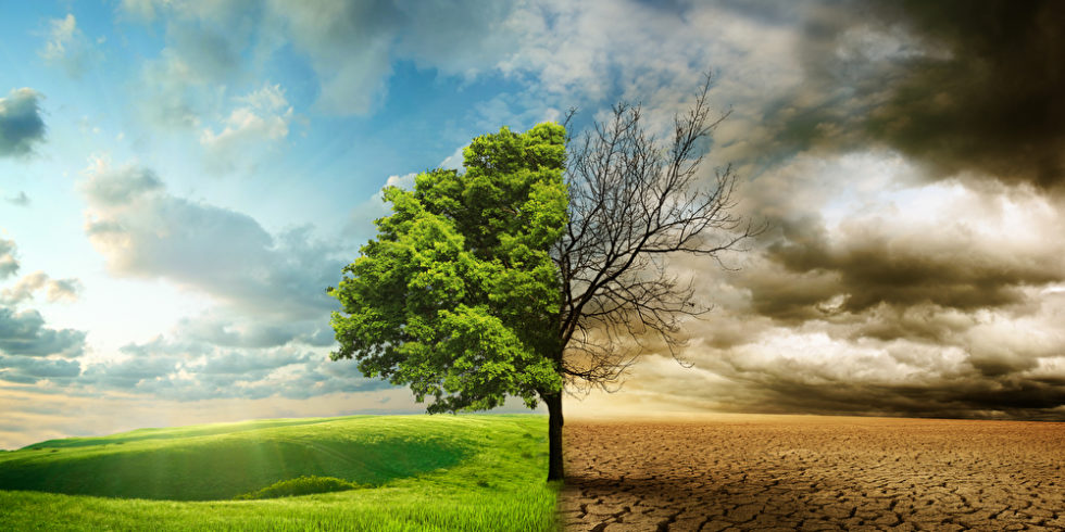 Bild, das auf der einen Seite einen grünen Baum und auf der anderen Seite einen vertrockneten Baum in der Wüste zeigt