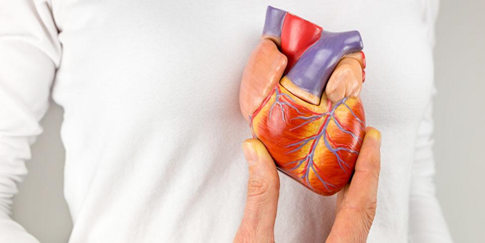 Eine Hand hält ein Herz-Modell