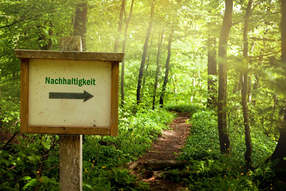 Wald mit Schild Nachhaltigkeit