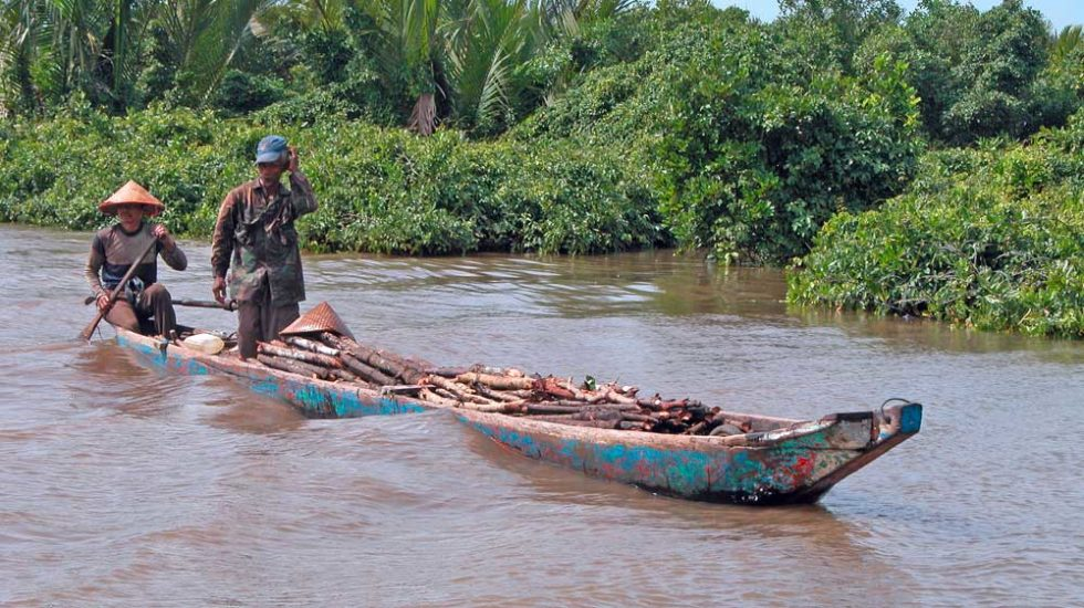 Boot mit Mangrovenholz