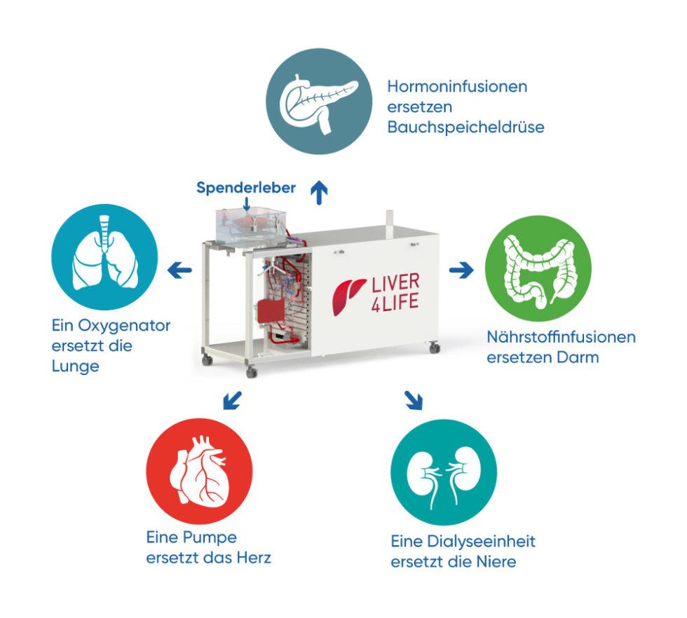 Schema Perfusionsmaschine