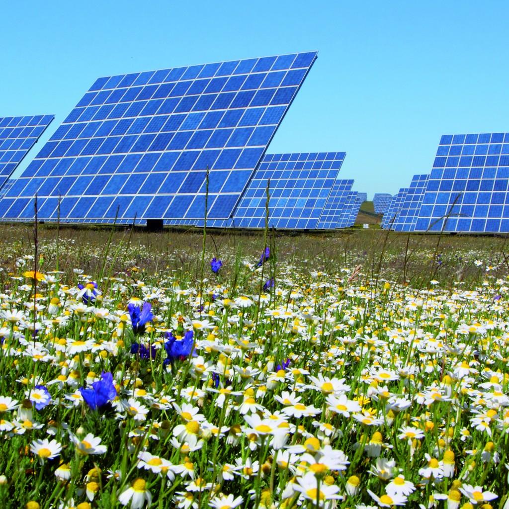 Bild 2 Verschwenderische und erfolgreiche Natur: Für Investoren und Betreiber von Solaranlagen lohnt es sich, diesem Vorbild zumindest in Ansätzen zu folgen und bei der Auswahl der Komponenten nicht ausschließlich auf die niedrigsten Preise zu setzen. Bild: Phoenix Contact  www.phoenixcontact.de