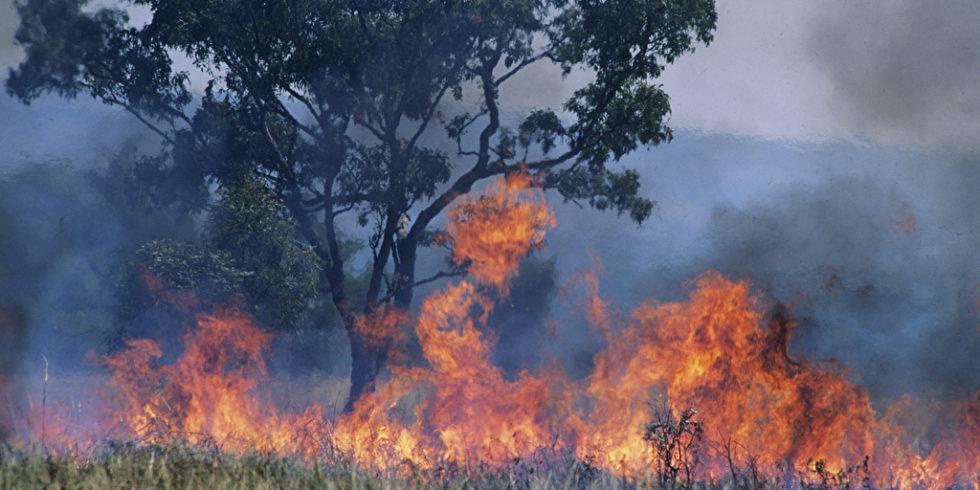 Feuer Brand in Natur am Baum