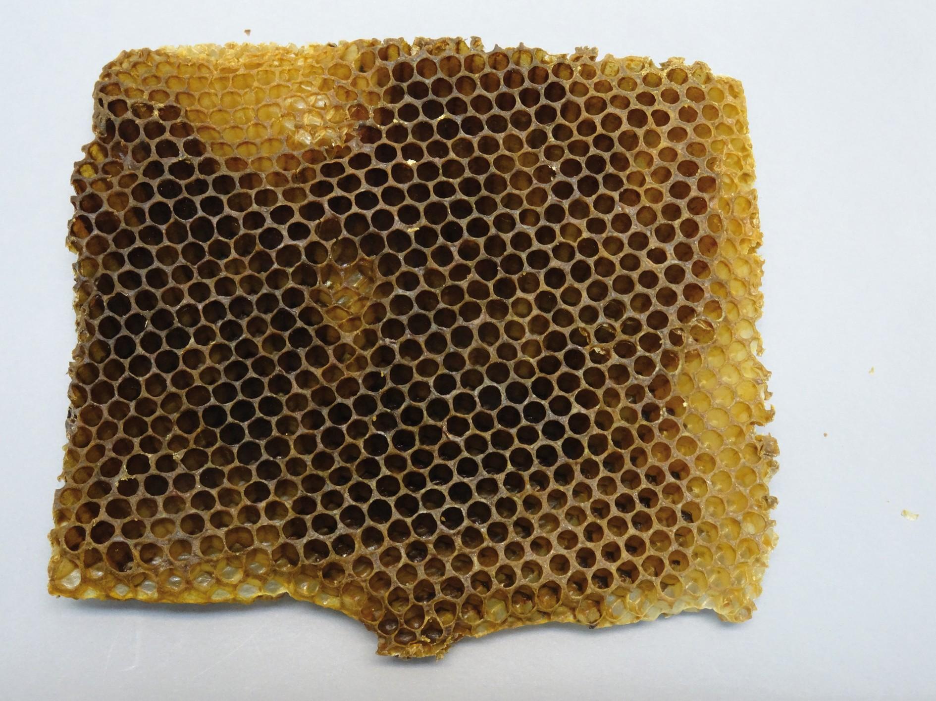 Bild 3. Wachs, hier Drohnenwabe nach dem Schlupf der männlichen Bienen, wird als Naturbau vollständig von den Bienen selbst produziert.  Bild: Monica Wäber