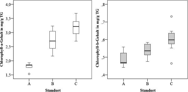 Bild 5. Gehalt an Fotosynthesepigmenten in den Flechtenproben Parmelia sulcata in untersuchten Erlenwaldgebieten. Quelle: Immanuel Kant Baltic Federal University/ TH Gießen