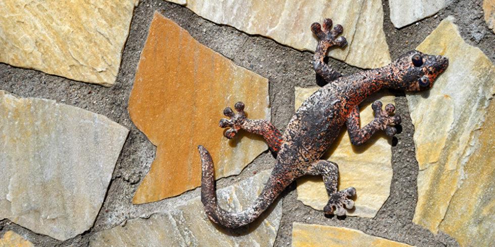Gecko aus Eisen