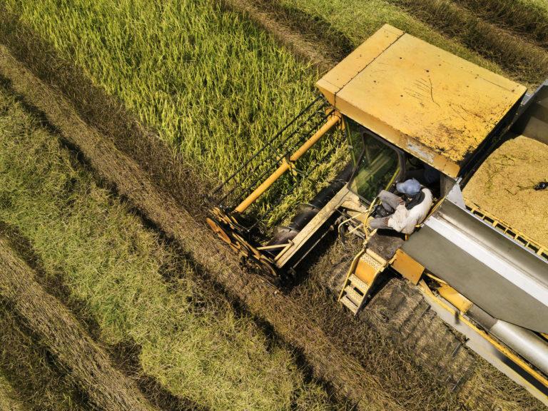 Bayer möchte zur Reduzierung von Hunger und Armut auf der Welt beitragen, indem das Unternehmen Landwirten hilft, die Produktivität nachhaltig zu erhöhen und ihr Einkommen zu steigern. Foto: Bayer AG