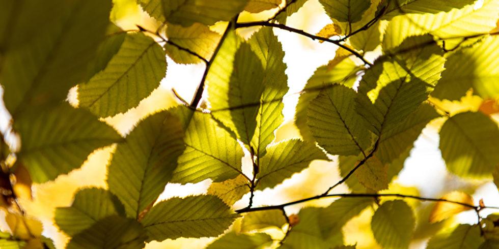 Nicht nur Pflanzen betreiben Photosynthese: Die Nutzung von Sonnenlicht könnte bald effizienter werden – dank neuer Biosolarzellen. Foto: Panthermedia.net / MicEnin
