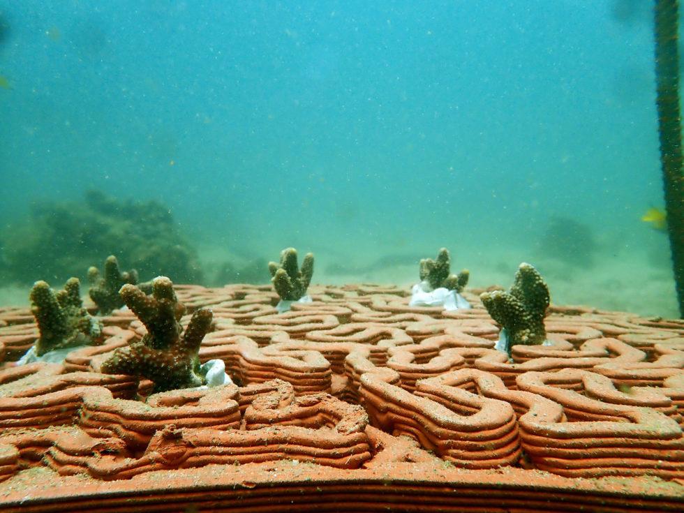komplexe Grundlage für die Korallenbefestigung