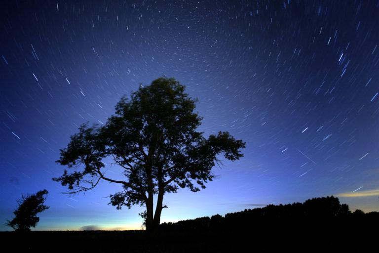 Sternschnuppen Himmel Baum
