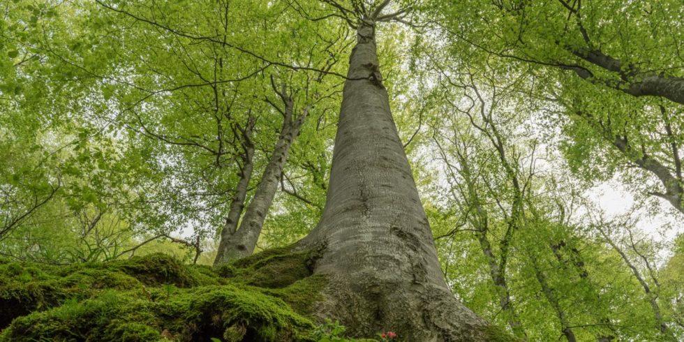 Primärwälder sind für den Erhalt der biologischen Vielfalt entscheidend, nur welche Strategie führt zum Ziel?  Foto: Tzvetan Zlatanov