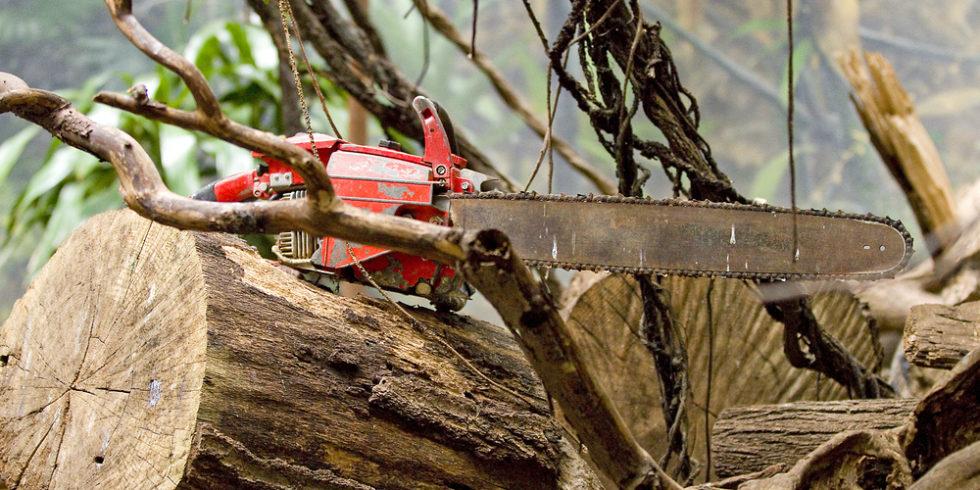 Kommt Holz für den Weltmarkt bald nicht mehr aus Wäldern? Foto: panthermedia.net/natursports