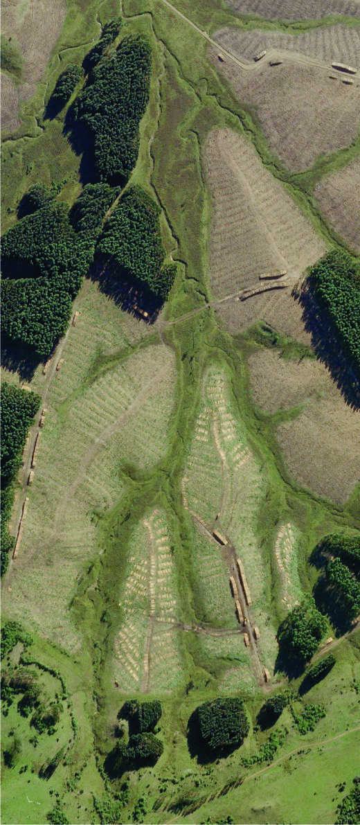 Satellitenbild zeigt leere Flächen Wald Uruguay