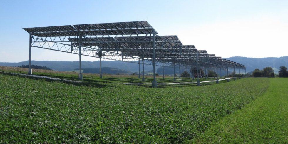 Agrophotovoltaik-Pilotanlage auf dem Gelände der Demeter-Hofgemeinschaft in Heggelbach. Unter den Photovoltaik-Modulen wachsen Nahrungsmittel. Bild: Fraunhofer ISE
