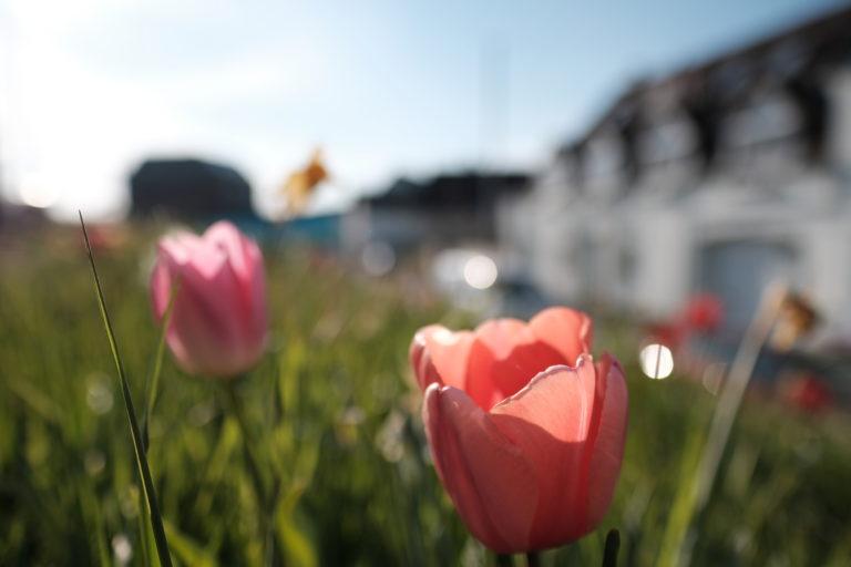 Unbearbeitetes JPEG. Foto: Peter Sieben