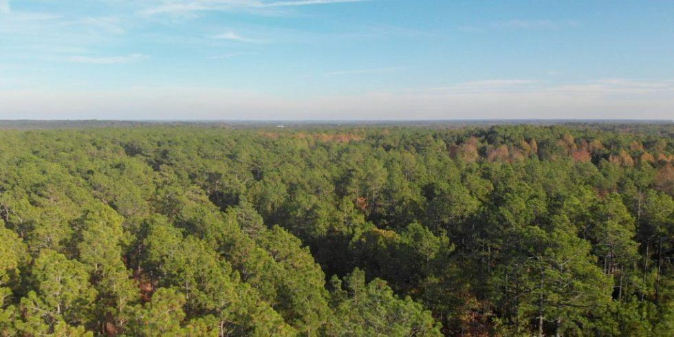 Wald in Roanoke Rapids im Halifax County des US-Bundesstaats North Carolina. Foto: Enviva