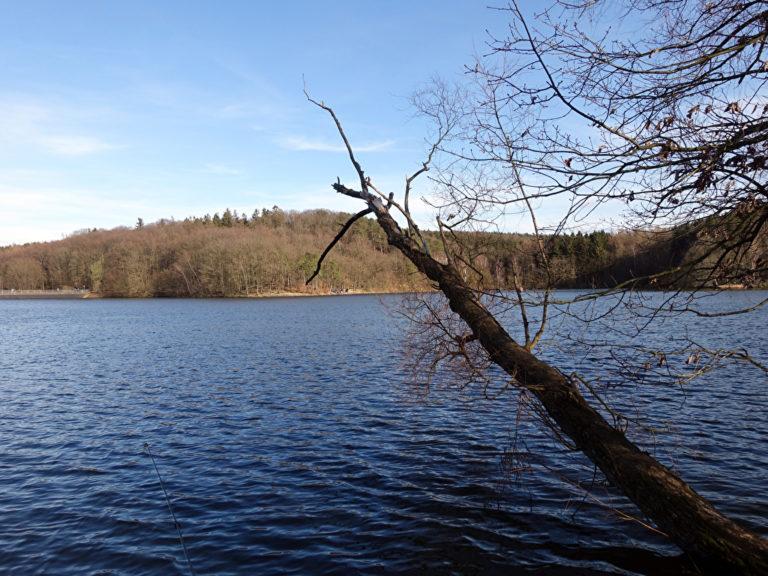 See Steinbachtalsperre mit Baum