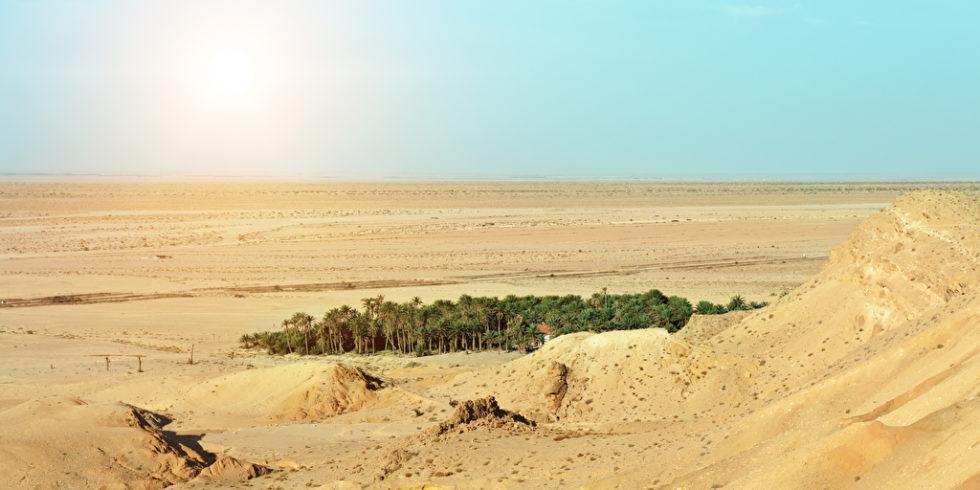 Grüne Insel in der Wüste