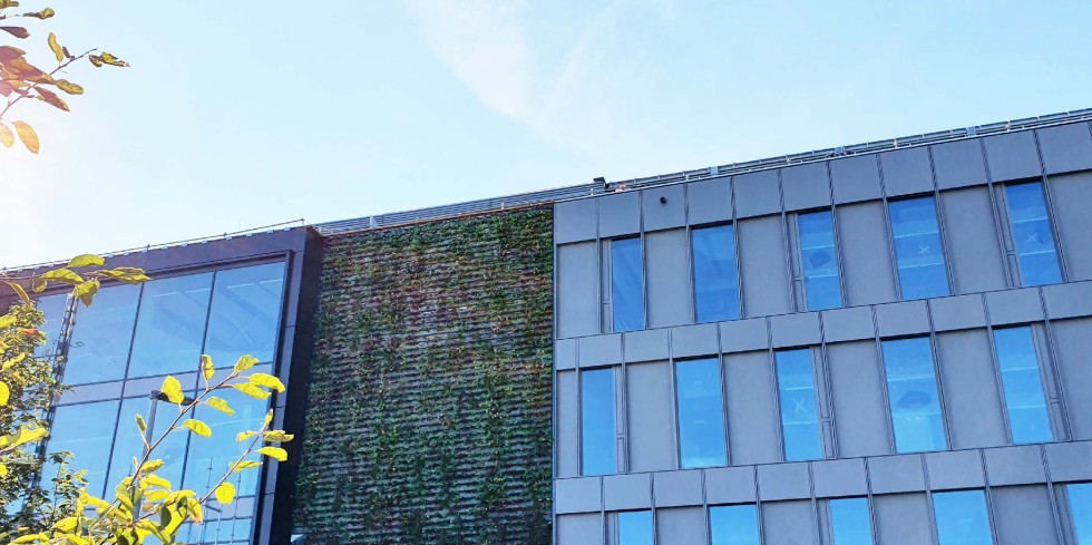 Bei der 12 Meter hohen Grünfassade am Büroneubau von Drees & Sommer in Stuttgart müssen nicht nur strenge Brandschutzauflagen beachtet werden, auch ein Pflanzplan war erforderlich, der trotz der Ausrichtung der Fassade nach Norden einen abwechslungsreichen Eindruck macht. Foto: Drees & Sommer